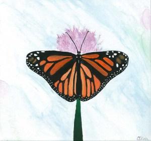 butterfly2015-web